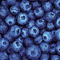 Blueberry Harvest by Greg Vaughn