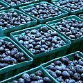 Blueberry Season In Maine by Wendy Barrett