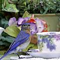 Bluebird And Tea Cups by Luana K Perez