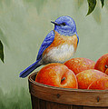 Bluebird And Peaches Greeting Card 3 by Crista Forest