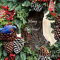 Bluebird Christmas Wreath by Nava Thompson