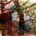 Bluebird Home by Ericamaxine Price