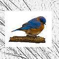 Bluebird In Prairie Frame by Crystal Heitzman Renskers