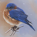 Bluebird In The Snow by Lena Auxier