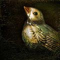Bluebird by John Anderson