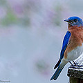 Bluebird Of Happiness by Sheen Watkins