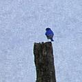 Bluebird On A Fencepost by Nick Kirby