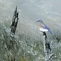 Bluebird On Post by Heather Bass
