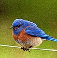 Bluebird  Painting by Jean Noren