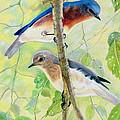 Bluebird Pair by Marilyn Smith