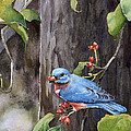 Bluebird - Red Berries by Steve Hamlin