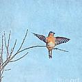 Bluebird Wings - Minimalism by Kerri Farley