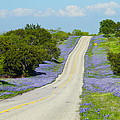 Bluebonnet Highway 2am-28667 by Andrew McInnes
