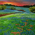 Bluebonnet Sunset by Genie Morgan