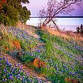 Bluebonnet Trail by Inge Johnsson