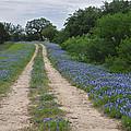 Bluebonnet Trail by Lynn Bauer
