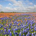 Bluebonnets And Paintbrush Near Whitehall Texas 2 by Rob Greebon