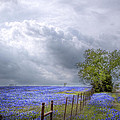 Bluebonnets And Spring Rain by David and Carol Kelly