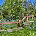 Bluebonnets And Stairs by Allen Sheffield