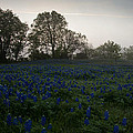 Bluebonnets On A Hazy Morning by Mark Alder
