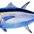 Bluefin Tuna by Carey Chen