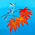 Bluejay In The Fall 2 by Duane McCullough