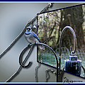 Bluejay Oob - Featured In 'out Of Frame' And Comfortable Art Groups by Ericamaxine Price
