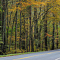 Blueridge Parkway Virginia by Todd Hostetter