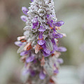 Blumen by Miguel Winterpacht