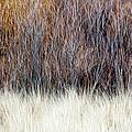 Blurred Brown Winter Woodland Background by Elena Elisseeva