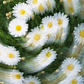 Blurred Daisies by Chevy Fleet