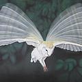 Blurred Wings by John Hebb