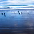 Blurry Bird Beach by Bryan Toro