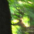 Blurry Buck by Joshua Bales