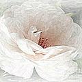 Blush by Maureen J Haldeman