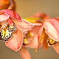 Blush Orchid by Rick Barnard