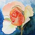 Blushing Bloom by Patricia Novack