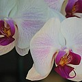 Blushing Orchids by Susan Stevens Crosby
