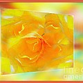 Blushing Yellow Rose Framed by Becky Lupe