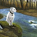 Bo At The Patapsco by Deborah Butts