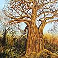 Baobab Tree by Caroline Street