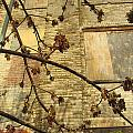 Boarded Windows And Branches by Anita Burgermeister