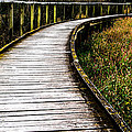 Boardwalk 03 by Heather Provan