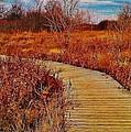 Boardwalk by Daniel Thompson