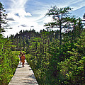 Boardwalk In Salmonier Nature Park-nl by Ruth Hager