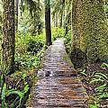 Boardwalk On The Rainforest Trail In by Ken Gillespie