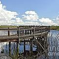Boardwalk Reflections by Carol  Bradley