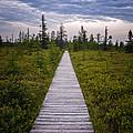 Boardwalk to Nowhere