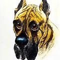 Boarhound Portrait by Kurt Tessmann