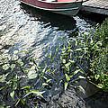 Boat At Dock On Lake by Elena Elisseeva